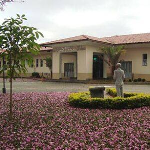 Cirurgia de Orelhas em São José dos Campos - SP